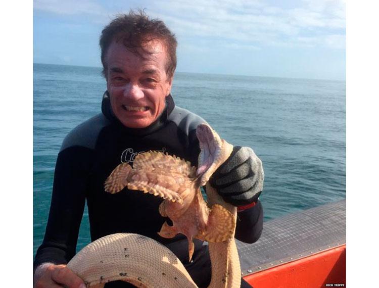 морская змея, дайвер, дайвинг, рыба-камень, рыба-черт, океанская бородавчатка, stonefish