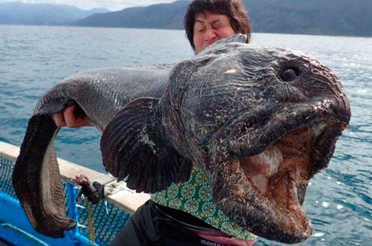 Картинки по запросу рыба-волк
